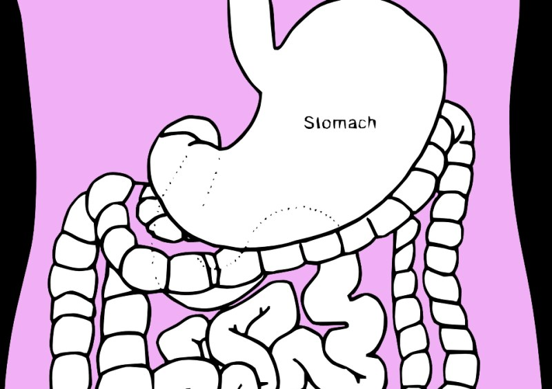 It's amazing what your stomach actually does