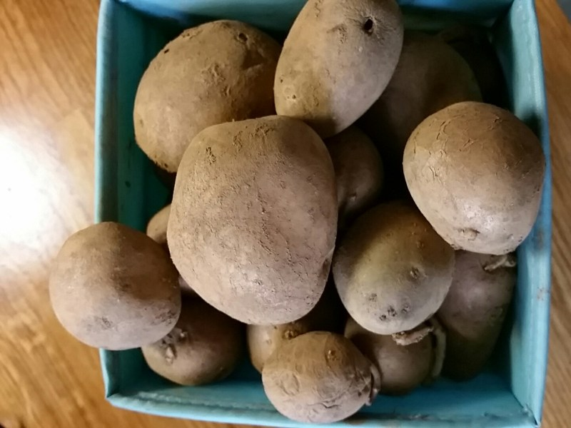 a box of home grown potatoes from gardening journalist Alice Whitehead's garden