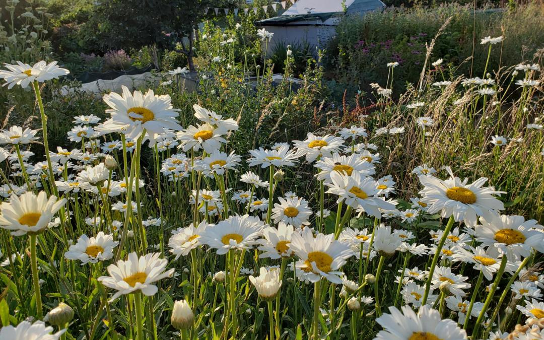 The Rough Guide to Allotments
