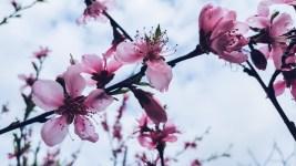 Arrietty's Cherry Tree Tea from The Borrowers