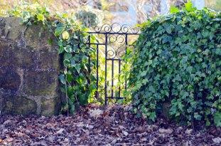 Miss Mary's Garden Blend from the Secret Garden
