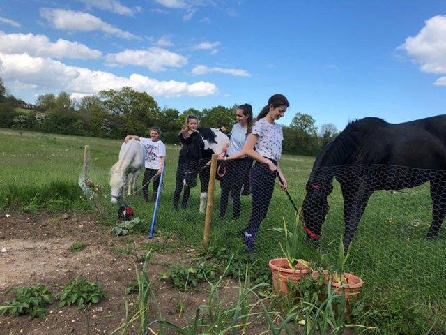 Horses weeding the Wonderpost allotment