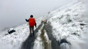 Les moutons aussi fuient la neige!