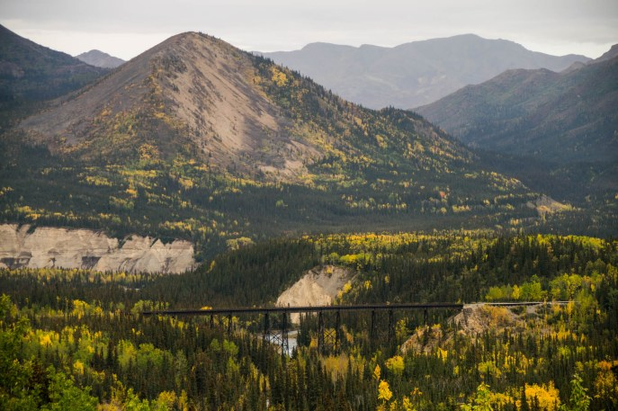 A railroad bridge extends high over a river among a colorful forest with shades of yellow and green. Autumn has arrived at Denali national park, Alaska.