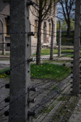 Electic barbed wire is seen lining the Auschwitz concentration camp. There is grass and flowers on the other side.