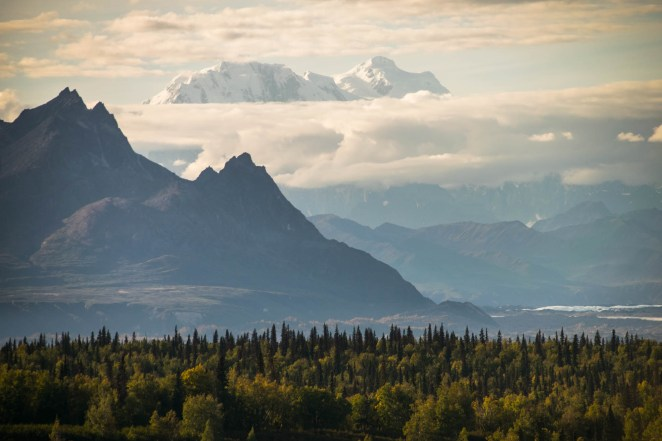 A layer of clouds is seen above and below Denali. A dense forest in the foreground extends to a jagged mountain close by.