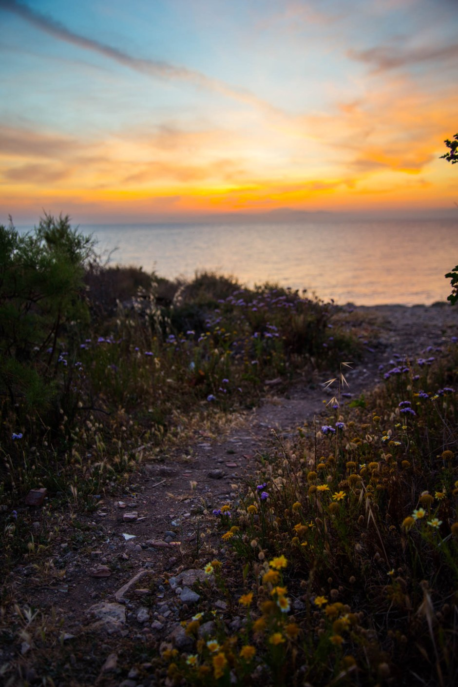 Purple and yellow wildflower line a rarely used trail leading to a sunset over the Mediterranean sea.