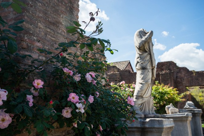 Pink flowering rose bushes are seen surrounding an ancient roman statue in italy. The statue is the last one standing among 3 and is missing its head.