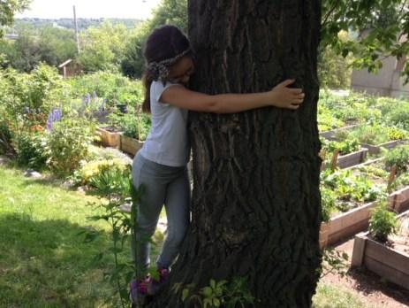 garden-tree