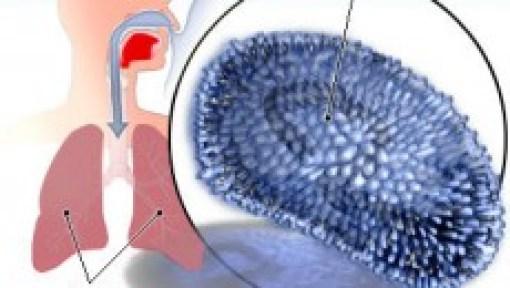 influenza virus wonderside