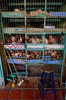 Minorista market - Chickens