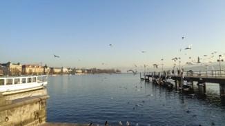 Gaviotas en el lago de Zurich