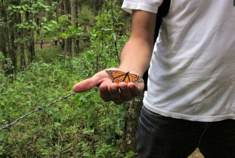 El Rosario Monarch Migration Sanctuary