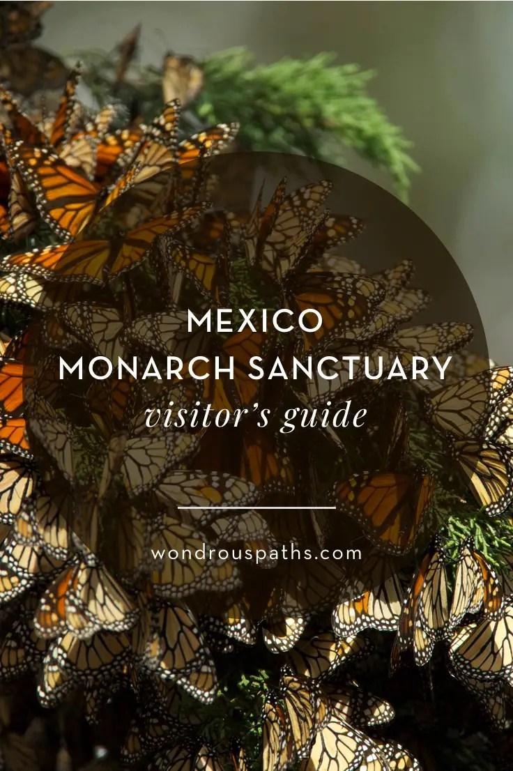 Mexico Monarch Migration Sanctuary visitor's guide | Wondrous Paths