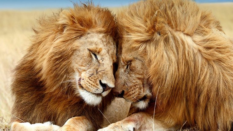 Wonkhe-two-lions