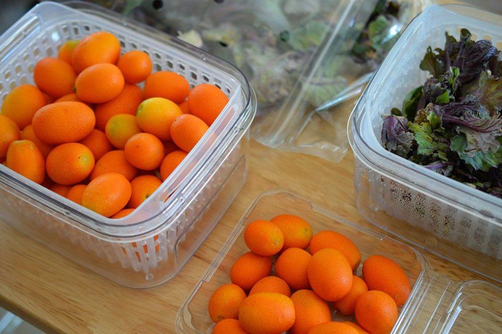 kumquats #oxogreensaver