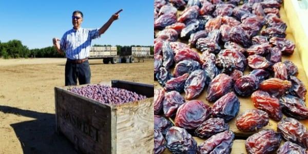 california prune farm