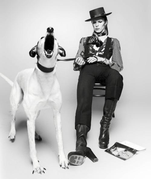 Bowie dog