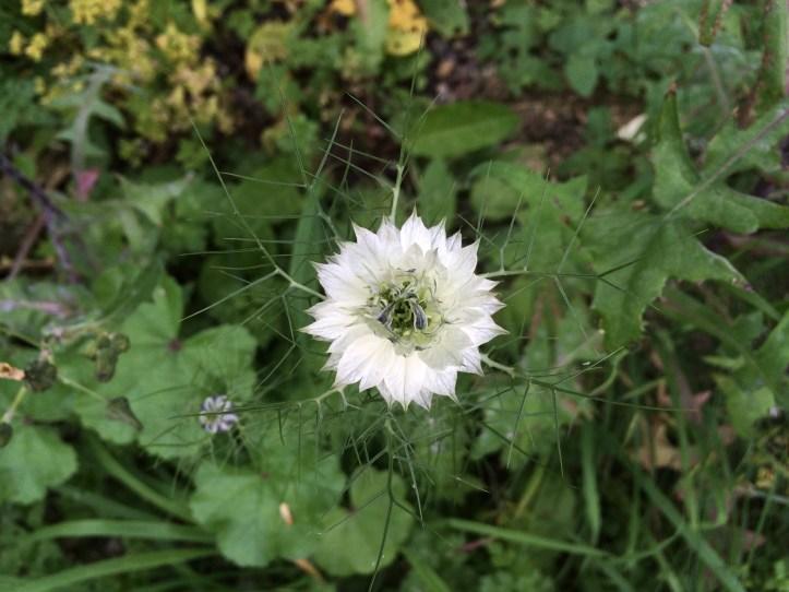 5 simple ideas to transform your garden