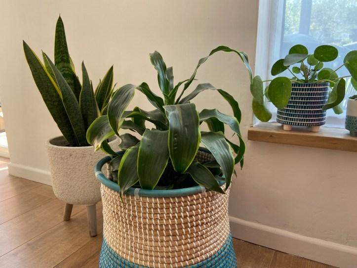 green plants living room