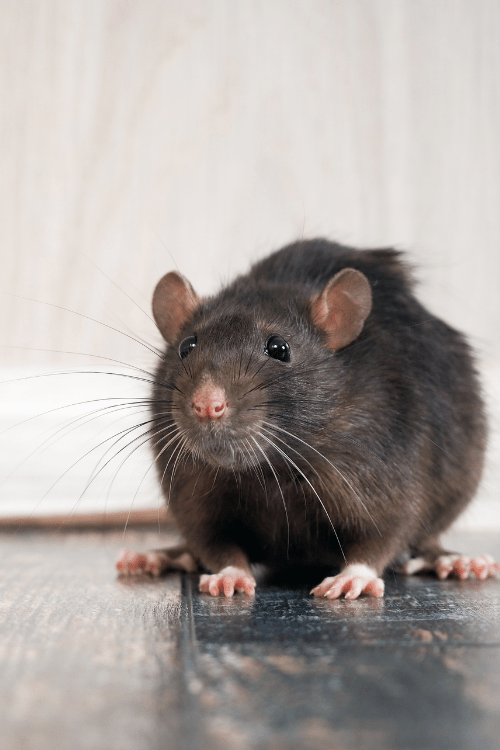 How to keep your house pest free