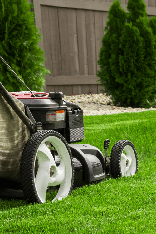 How to get a lush and healthy lawn this summer
