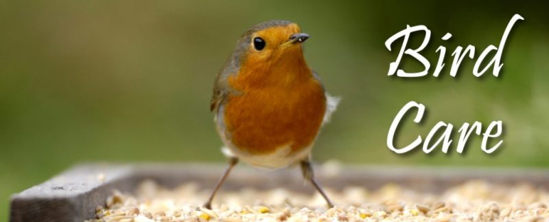 wild bird care header, slider image for Woodbank Nurseries - Bingley