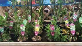 Water Plants – Huge Selection