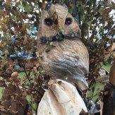 owl wood carving woodban nurseries