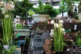 Amazing displays in the House Plant Pavilion at Woodbank Nurseries