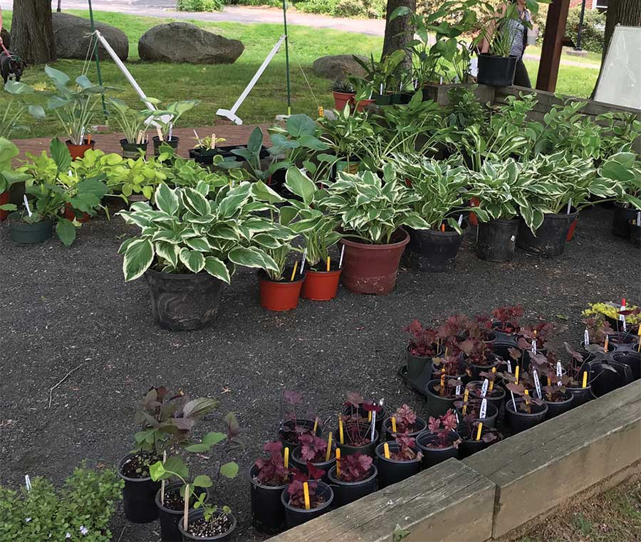 Garden Club Annual Plant Sale