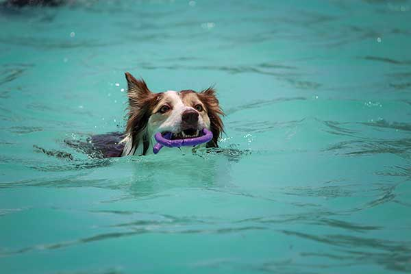 Bark Bytes… Helping Your Dog Overcome Their Fear of Water
