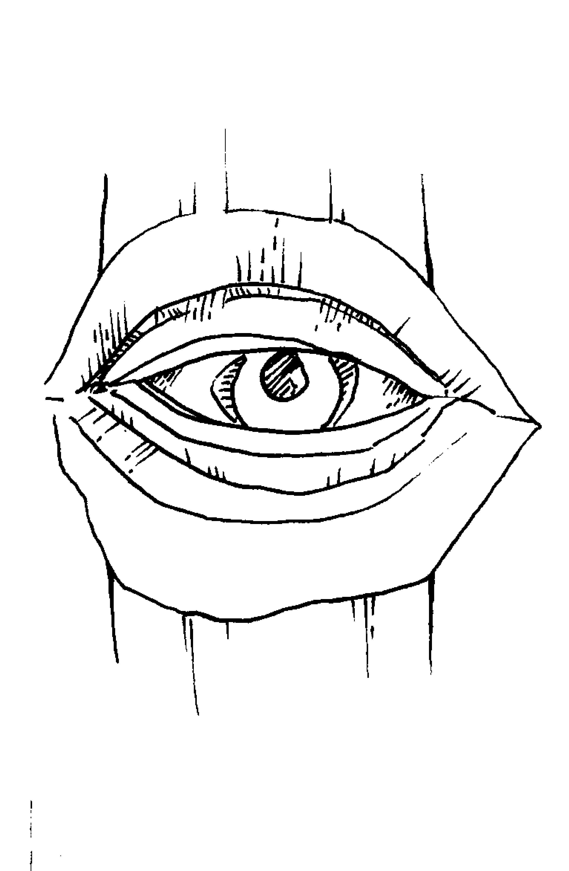 Carving An Eye