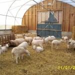 Sheep farm feed bins