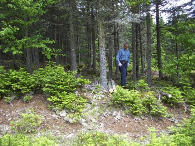Log harvesting.