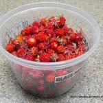 wild berries,strawberries,gardening,landscaping