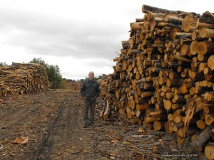 forestry,clear cutting