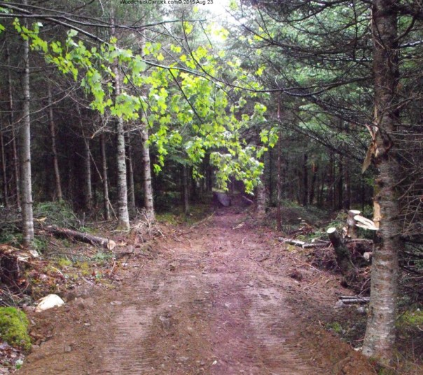 forestry,blazing a trail,blaze your own trail,path
