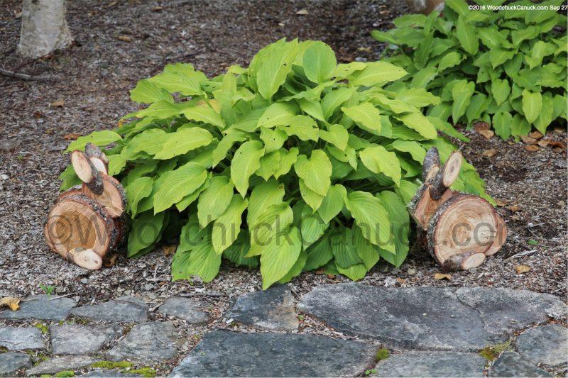 rabbits,wooden crafts,natural,tamarack,larch