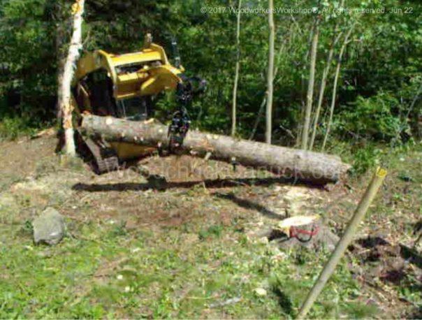 arborist,foresty management,landscaping