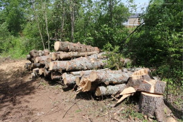 forestry,arborist,Antigonish,Guysborough County,Nova Scotia