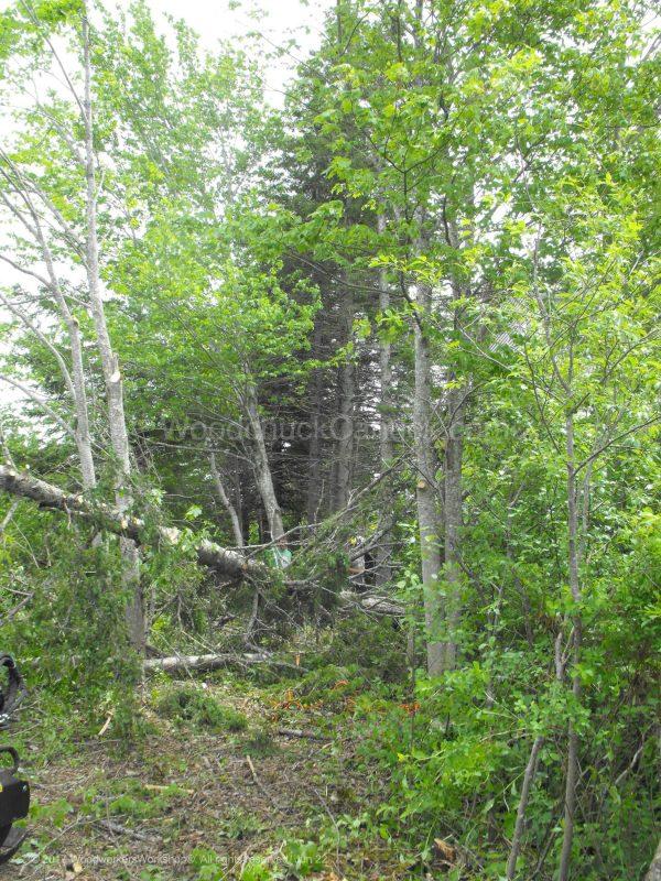 forest, landscaping,arborist,Antigonish County,Nova Scotia