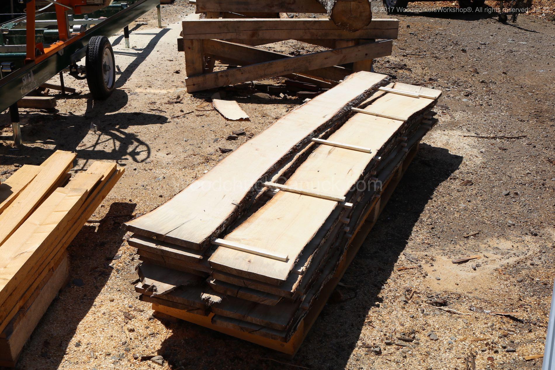 live edge sugar maple slabs.