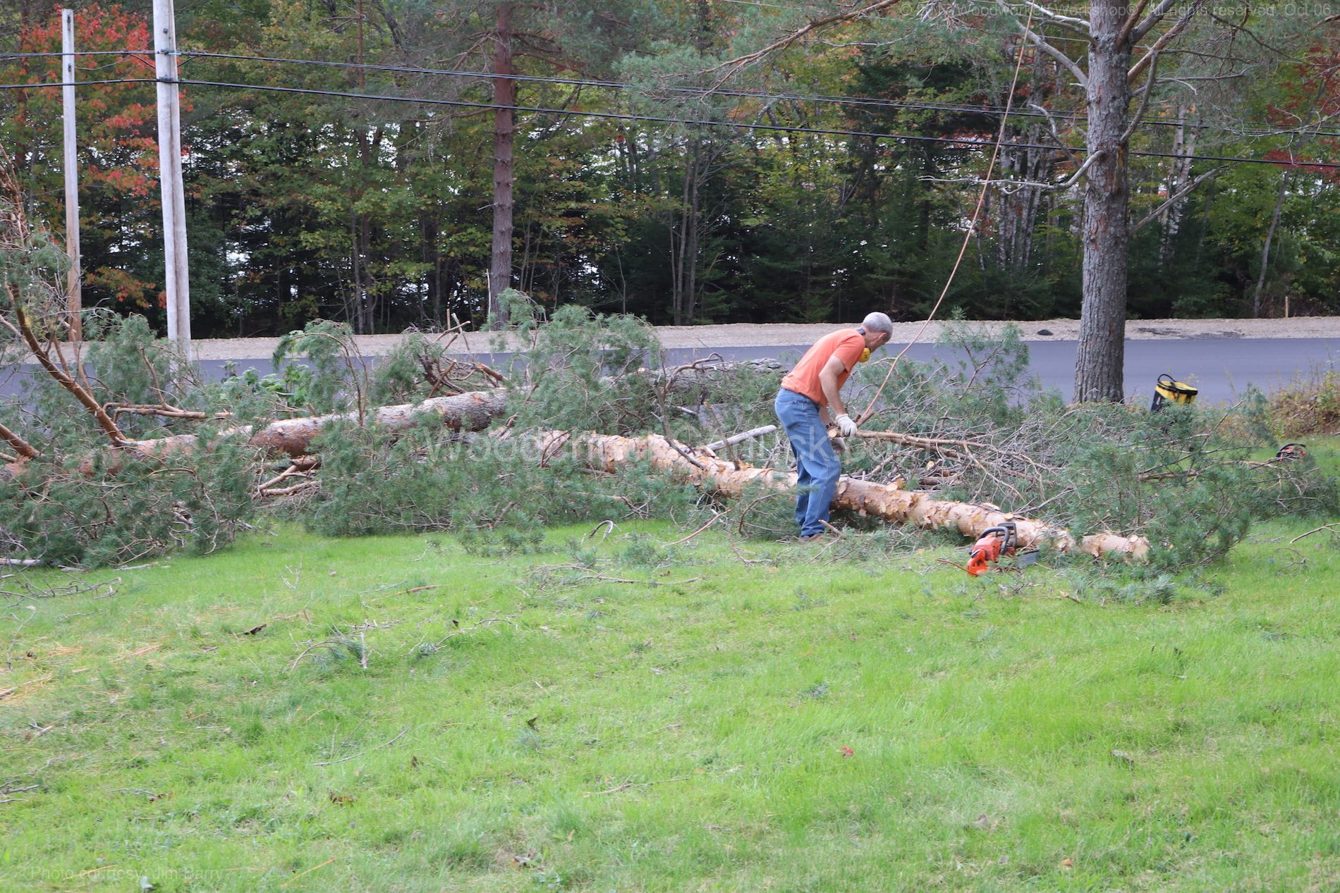 Bucking pine trees