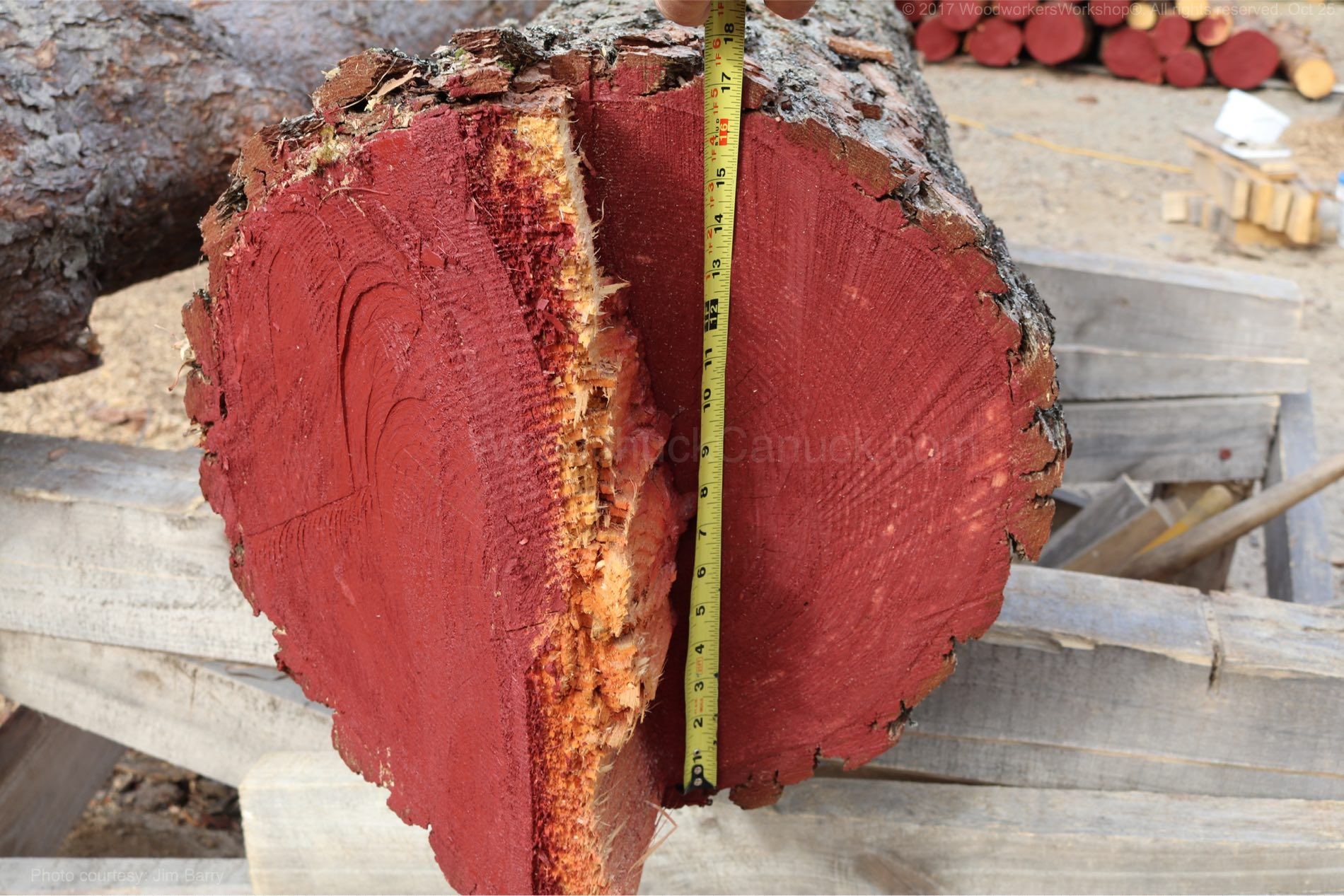 "16"" pine log"