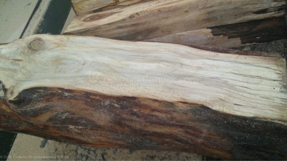 spalted sugar maple,saw milling