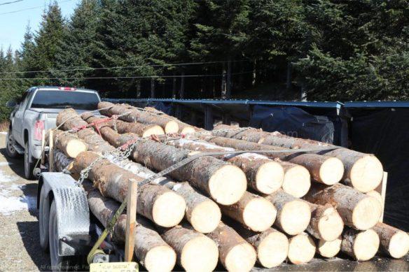 spruce logs,piedmont