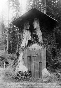 forestry,logging,vintage photos,old photographs,1800s