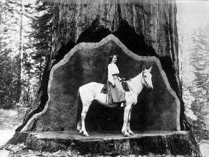 vintage logging photos, olf forestry photographs, women, horses