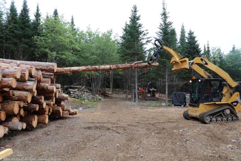 Pine logs